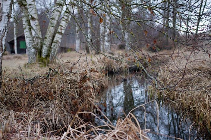 Kleiner Bach fliesst in einen Wald hinein