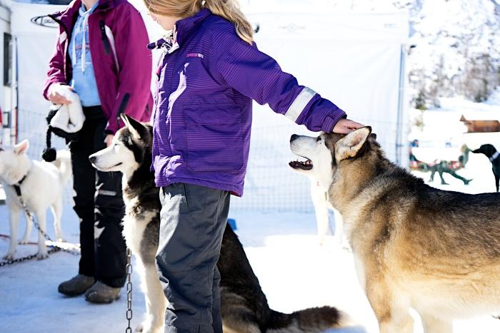 Warmer und sonniger Sonntag am Schlittenhunderennen in Kandersteg