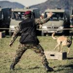 Militärhund Militär Grossanlass Thun